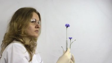 Researcher woman watch at flasks with genetically modified plant — Stock Video