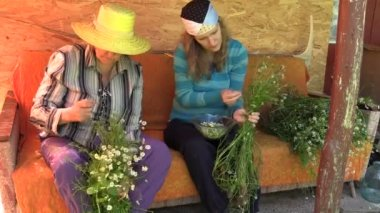 Grandmother and granddaughter women gather chamomile herb — Stock Video