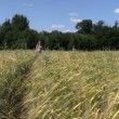 Beautiful pregnant woman walk through ripe rye field in summer — Stock Video #70886881