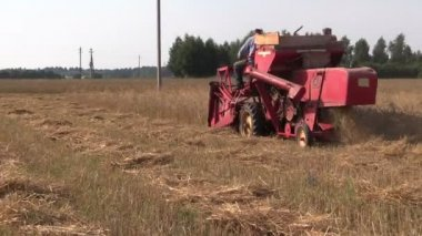 Medium peasant worker harvest wheat plants with red combine — Stock Video