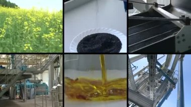 Plant blooms. Rape seed oil biofuel production. Footage collage. — Stock Video