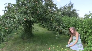 Pregnant woman gather ripe apple fruits in garden — Stock Video