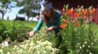 Girl reap organic domestic camomile near lily bush, focus change — Stock Video