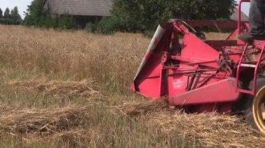 Retro combine harvester trash ripe grain field in summer — Stock Video