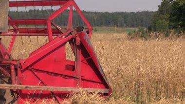 Agricultural combine harvester cut ripe wheat grain field — Stock Video