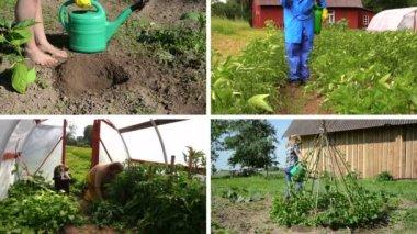 Ecologic giardinaggio in fattoria rurale. Collage di clip. — Video Stock
