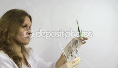 Scientist woman put wheat plant in flasks in research laboratory — Stock Video