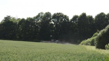 Tractor spray fertilize wheat crop plant field near forest — Stock Video