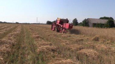 Harvester work barley corn field. Activities rural countryside — Stock Video