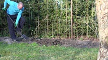 Gardener man dig flower bed soil ground near rose sprouts. 4K — Stock Video
