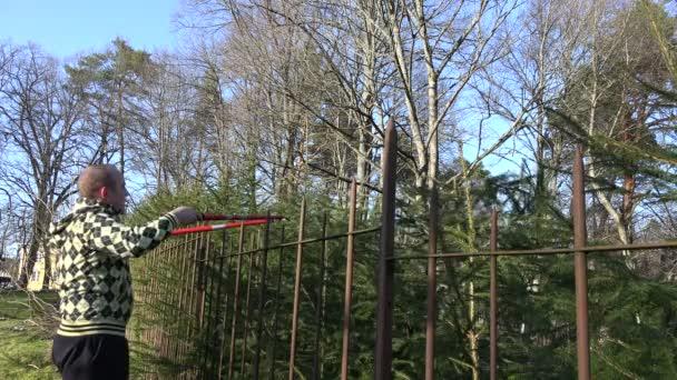 Hombre masculino jardinero para cortar un seto de árboles de abeto. 4k — Vídeo de stock