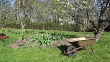 Chlap ti mow trávníku. Rezavý barrow. Květiny a stromy kvetou. 4k — Stock video