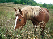 Brown horse with yellow mane — Stock Photo