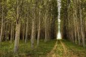 Path through the orchard. — Stock Photo