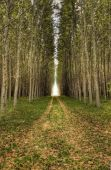 Dirt road leads through trees. — Stock Photo