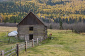 Cow behind barn in north Idaho. — Stock Photo
