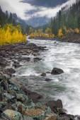 Estran rocheux de la rivière. — Photo