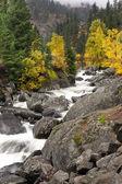Rapids of Icicle Creek. — Stock Photo