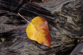 Yellow leaf on log. — Stock Photo