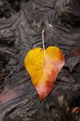 Leaf on groved, weathered log. — Stock Photo