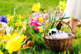 Easter bunny on meadow with basket and eggs — Stock Photo