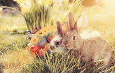 Easter bunnies on meadow with basket and eggs — Stock Photo