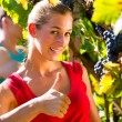 Winegrower picking grapes at harvest time — Stock Photo #71510703