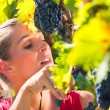 Winegrower picking grapes at harvest time — Stock Photo #71510879