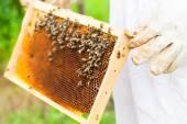 Beekeeper controlling beeyard and bees — Stock Photo