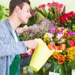 Florist working in flower shop watering plants — Stock Photo #79651516