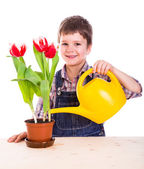 Boyl care flowers in pot — Stock Photo