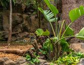 Jaguar Resting — Stock Photo