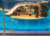 Sea Lions Enclosure — Stock Photo
