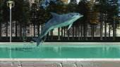 Marine mammal — Stock Photo