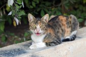 Kočka — Stock fotografie