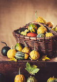 Pumpkin in the old basket — Stock Photo