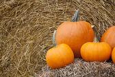 Orange pumpkins and hay bale — Stockfoto