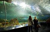Ripleys Aquarium Canada in Toronto — Stock Photo