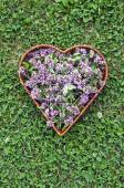 Medical herb oregano wild marjoram flowers in heart form basket — Stock Photo