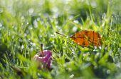 Pomme rouge et feuille d'automne dans l'herbe couverte de rosée verte — Foto de Stock