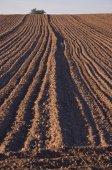 Paisaje de agricultura granja campo cultivado — Foto de Stock
