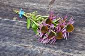 Medical herbs echinacea flowers bunch on ancient wooden  background — Stock Photo