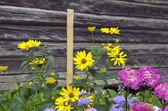 Flowers near old wooden barn wall — Stockfoto