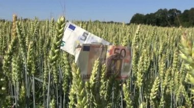 Agriculture business concept. euro banknotes on wheat ears — Stock Video