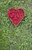 Medical healthy viburnum berry in wicker heart form basket — Foto de Stock