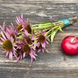 Medical herbs echinacea flowers bunch and red apple — Stock Photo #57629573