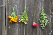 Herbal medicine flowers and red apple on wall — Foto de Stock