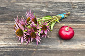 Medical herbs echinacea flowers bunch and red apple — Stock Photo