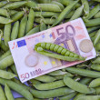 Harvest concept- euro money banknot on ripe pea pods — Stok fotoğraf #58033249