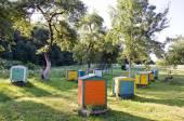 Honey Bee Hives Between Trees In Summer Garden — Stock Photo